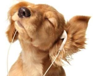 ingilizce dinleme calisma 300x244 Günlük İngilizce Çalışma Dinleme Programı